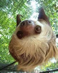 Lasting Literacy Learning: Lessons From a Sloth